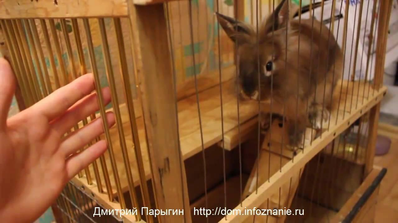 Как сделать клетку для декоративного кролика своими рук
