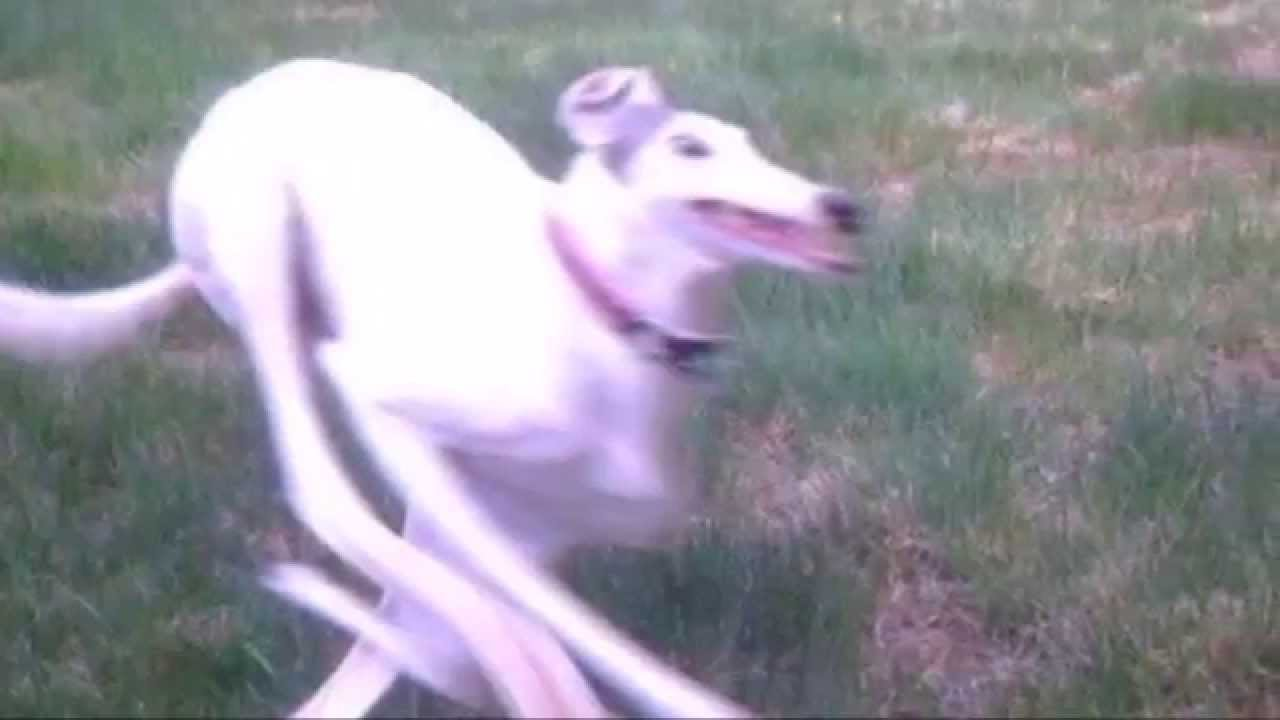 Very fast running at incredible hihg speed