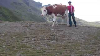 Walking in the Swiss Alps: Kleine Scheidegg to Mannlichen