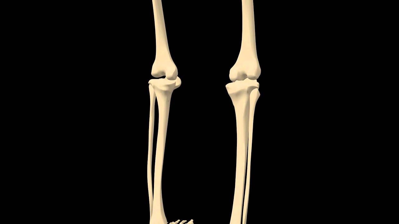 royalty free medical human skeleton hd footage - knee close up, Skeleton