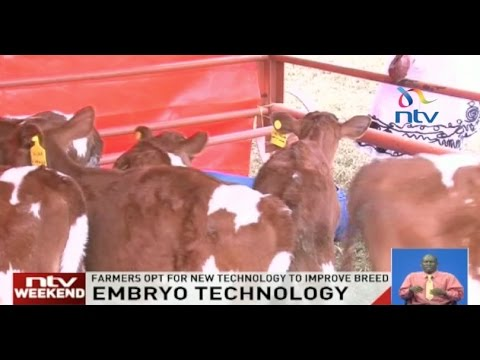 Embryo technology: Farmers opt for new technology to improve breed
