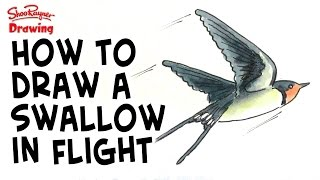 How to draw a swallow in flight