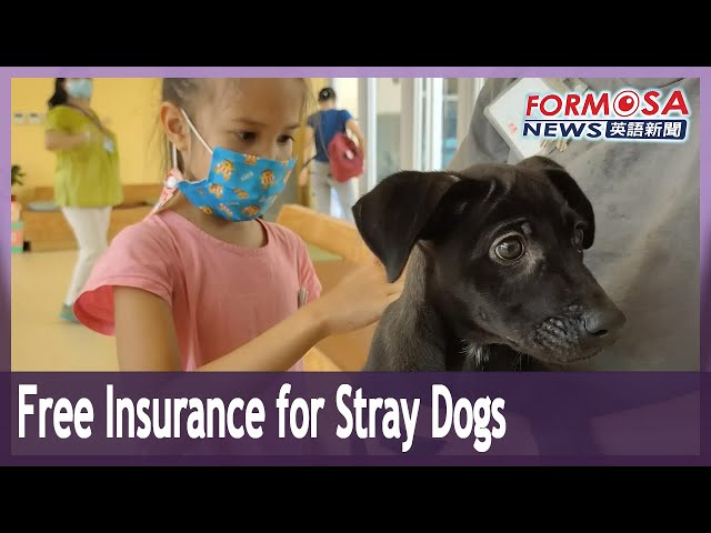 Free insurance given to adoptions of stray dogs in Hsinchu