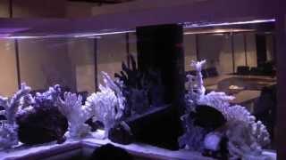 """Custom """"l"""" Saltwater Aquarium"""