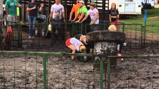 Cousin Pig Wrestling