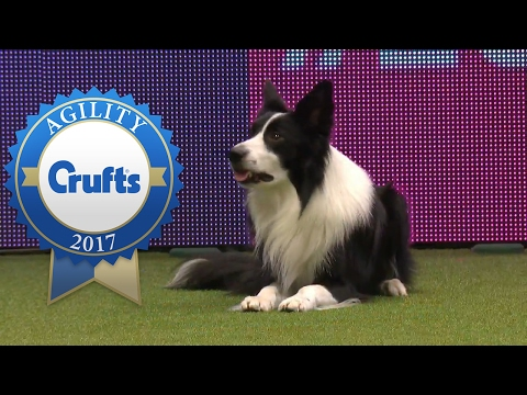 Agility - Large International Invitation Jumping Competition (Part 2)   Crufts 2017