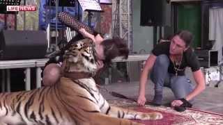 Голова артистки Ольги Погодиной в пасти тигрицы