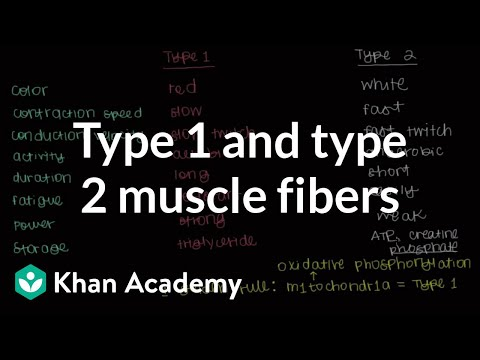 Type 1 and type 2 muscle fibers | Muscular-skeletal system physiology | NCLEX-RN | Khan Academy