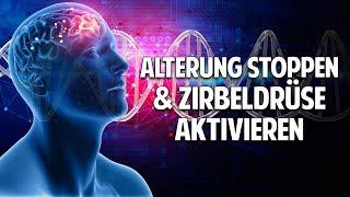 Alterung stoppen   Zirbeldrüse aktivieren   gesund & lange Leben - Prof. Dr. Dr. Enrico Edinger