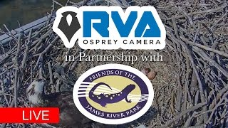 RVA Osprey Cam Presented by Friends of the James River Park