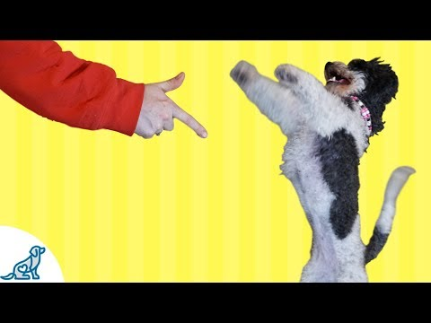 "Dog Tricks: Teach Your Dog To ""Stick 'Em Up!"""