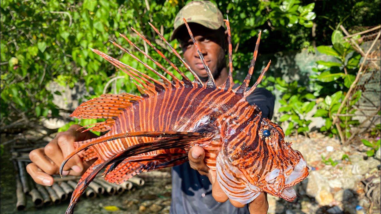 Catch & Cook Deadly Venomous Killer Reef Fish