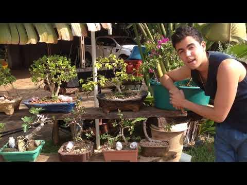 🔴COMO ADUBAR O BONSAI (Osmocote)+ PORTA ADUBOS CASEIRO - BonsaiCurso # 32