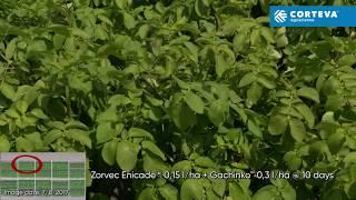Zorvec Potato Lelystad Corteva 2017