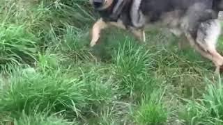 История избитой собаки спустя 2 года