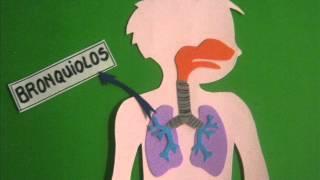 Respirar para vivir (sistema respiratori...