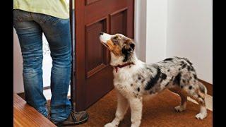 Выскакивание за дверь Собака - друг человека. Воспитание без насилия. Метод Пола Оуэнса.