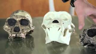 2 million year old fossils reveal hearing abilities of early humans