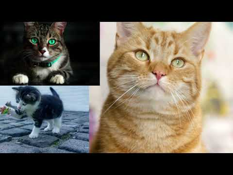 1 MINUTE OF CUTE CATS / MAKE YOU HAPPY