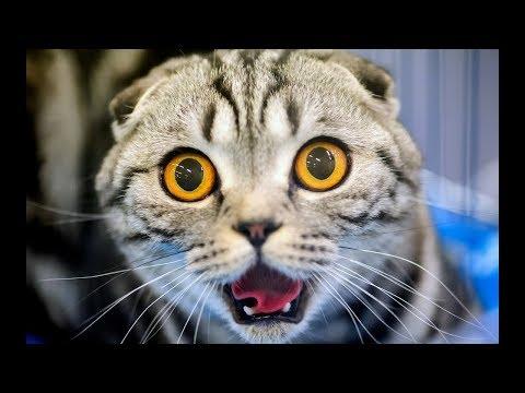 Смешные КОТы и Животные / Funny Cats, Dogs, and Pets