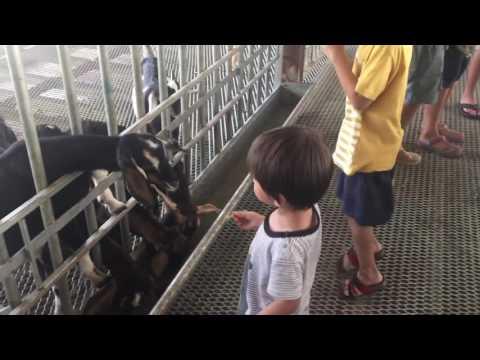 21.11.2016 - Goat Farm, Singapore