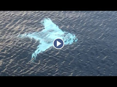 Drone Captures Huge White Manta Ray