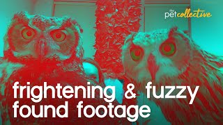 Revenge of the Frightening Fuzzy Found Footage
