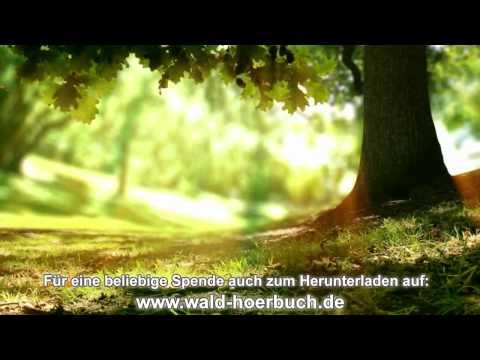 Wenn der Wald spricht - 9. Kapitel - Sich selbst vergeben
