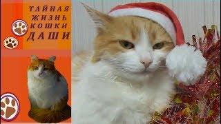 СТИХ НА НОВЫЙ ГОД 2019. Поздравление с Новым 2019 годом от кошки Даши
