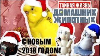 Тайная жизнь домашних животных! Волнистого попугая! Новогодняя ночь! *** The secret life of Pets