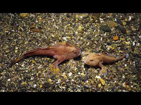 Australian Endangered Animals