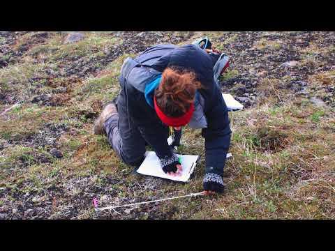 Zackenberg -Effect of Climate Change on Arctic Vegetation