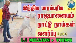 Rajapalayam | இந்தியாவின் பாரம்பரிய நாட்டு நாய்கள் வளர்ப்பு | Indian Dog Breed Lover