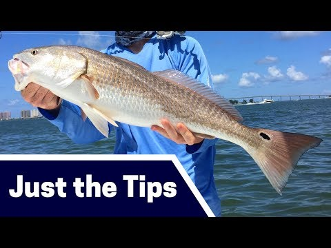 Spring Redfish Fishing Tips: Where, Bait, And Tackle [Just The Tips]
