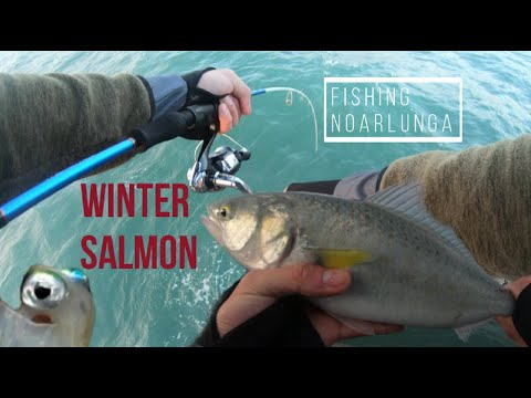Fishing At Noarlunga Jetty For Big Australian Salmon (HOW TO; MID-LATE WINTER)