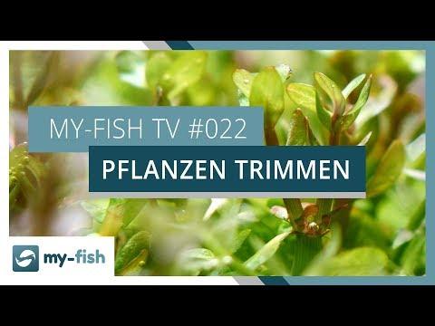 Pflanzen trimmen und vermehren | my-fish TV