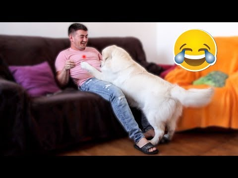 Me and My Dog Playing with Laser: Funny Dog Reacts to Laser
