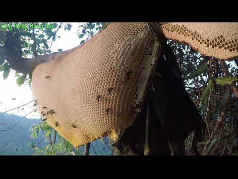 Ong khoái khủng gần 20lít như thế nào