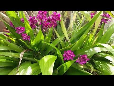 Flores Do Jardim E Som Da Cascata Relaxante