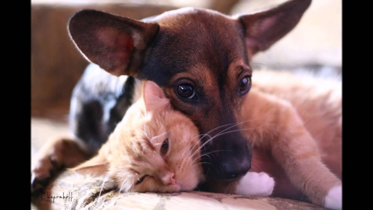 Дружба кошек и собак - YouTube
