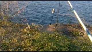 рыбалка кура 2013