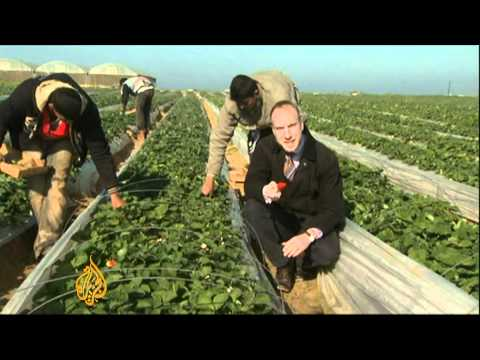 Israeli blockade limits Gaza farm export