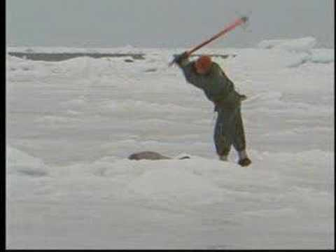 Canada's Brutal Annual Seal Hunt Begins