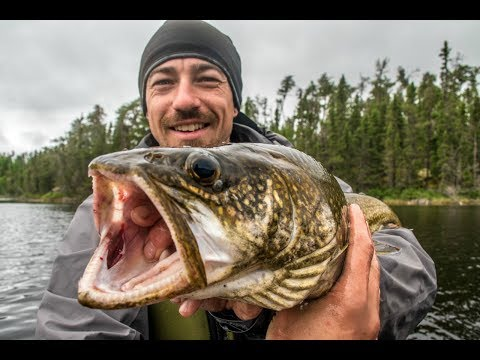 Catch and Cook and Camp! 2 Beautiful Lake Trout- 8 Days in the Wild!