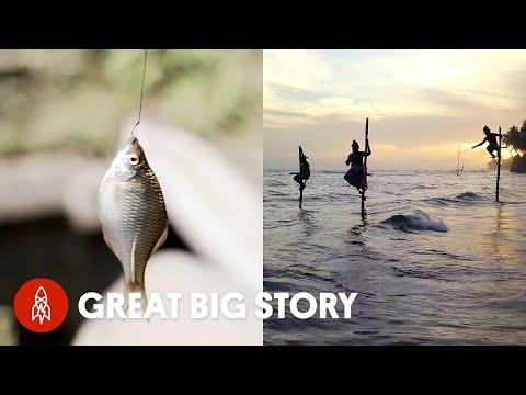 5 Creative Ways People (and Birds) Fish Around the World