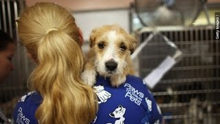 Deadly Dog Flu, Known As H3n2, Spreads Beyond Midwest