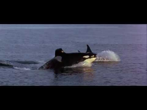 03. Whales (Free Willy 2 / 1995) Soundtrack