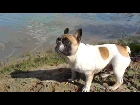 Девчонки на пляже видео — img 4