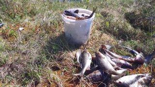 Рыбалка на окуня в Карелии на озере бешеный клев