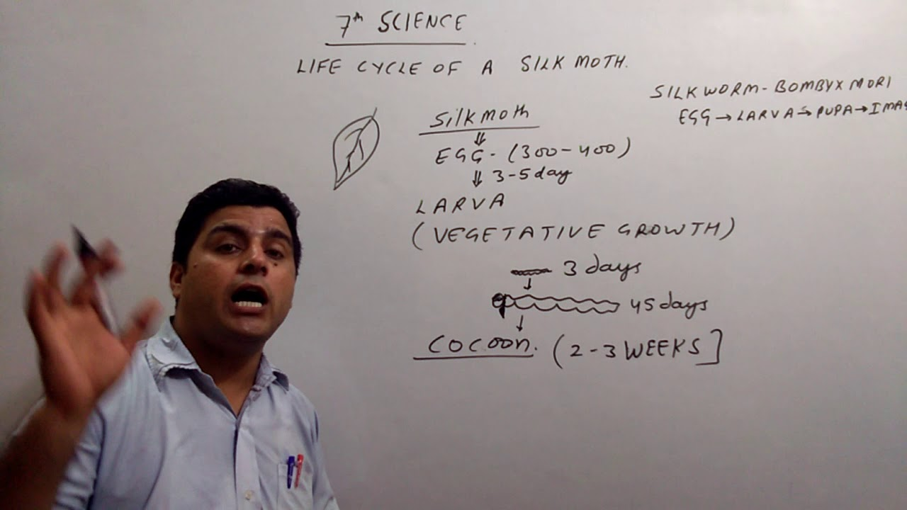 7th Science Silk worm Life Cycle in Hindi BEST EXPLANATION